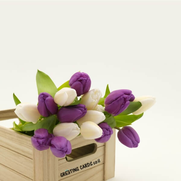 תמונות של פרחים סגול ולבן
